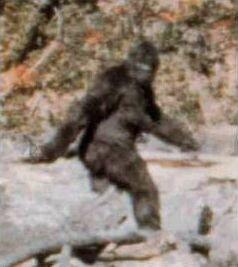Bigfoot?